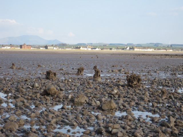 From Mtta Scar, with Sabellaria 'sculptures', Allonby and distant Skiddaw (photo: Ann Lingard)
