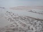 The Sabellaria reefs trap the tide. (photo: Ann Lingard)