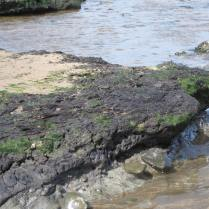 Peat and clay at Beckfoot