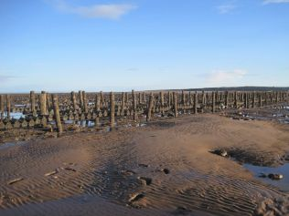 Oyster-lines at Dubmill Point